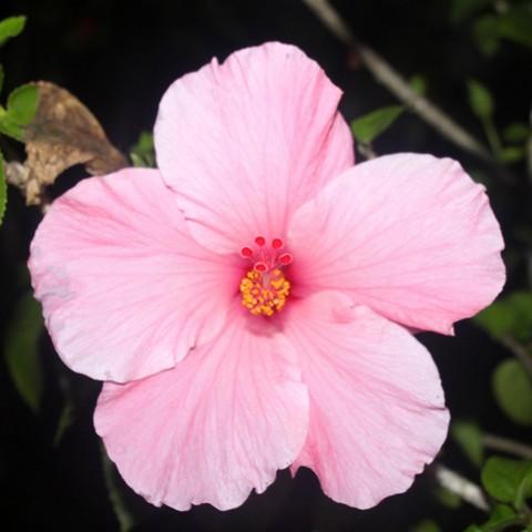 Ons Fotohoekje Planten Exotische Bloemen